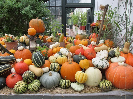 A display of squash