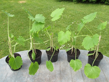5 repotted plants