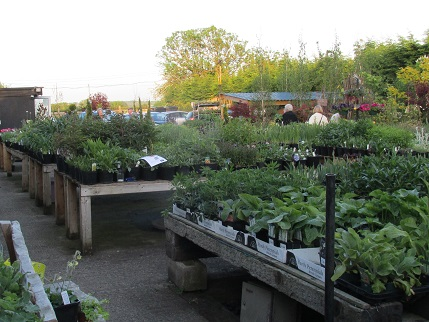 A view of Hillcrest nursery