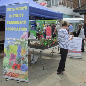 Our stall at Letchworth Festival