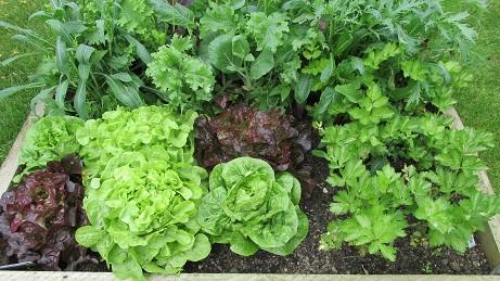 A veg patch