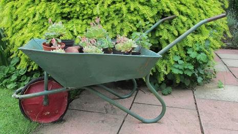 Plants in a wheelbarrow