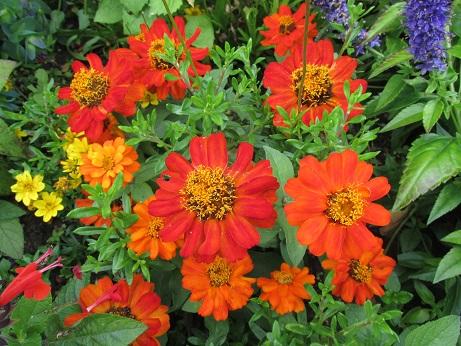 Mixedflowers