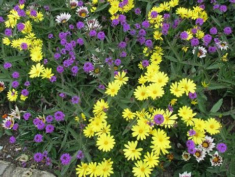 Yellowpurpleflowers