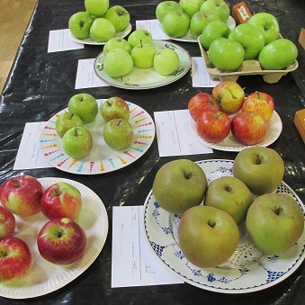 A display of apples
