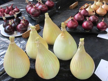 A display of onions