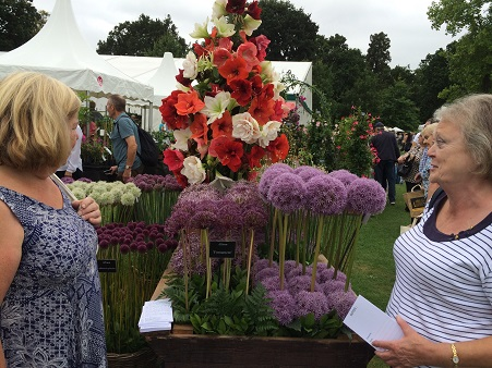 Members enjoying the allium display