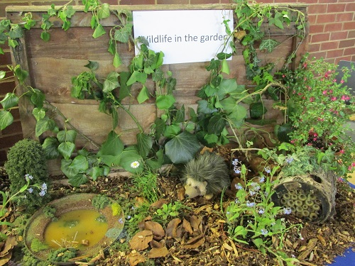 Our wildlife display with toy hedgehog and pond