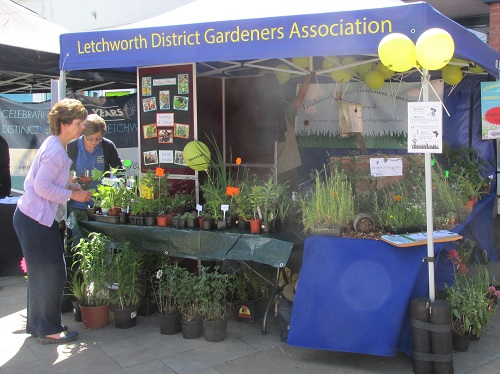 Our stall at the Letchworth Festival with the wildlife display, banners, balloons etc