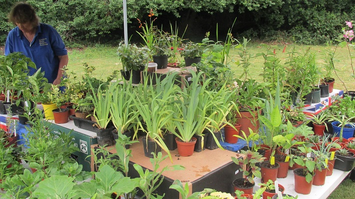 All the plants set out ready for sale