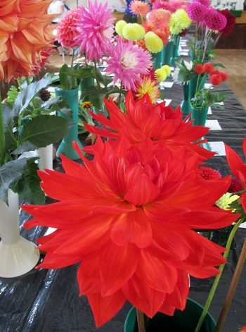 Flowers from the Autumn Show
