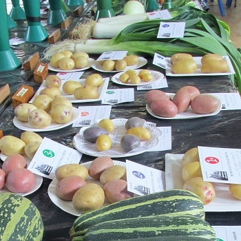 Vegetable displays with marrows, potatoes and leeks