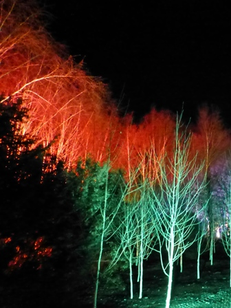 Winter lights at Anglesey Abbey - trees lit in green and red