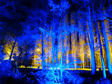 Winter lights at Anglesey Abbey - trees lit in blue with yellow behind