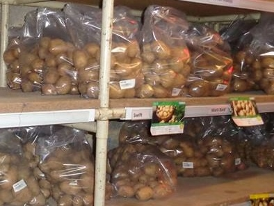 Seed potatoes on the trading store shelves