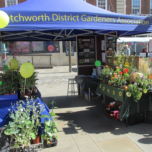"Our Letchworth Festival stall"" width="