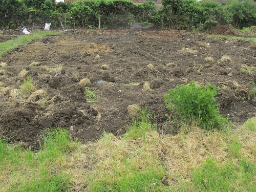 Seedlings plot in May - clearance under way
