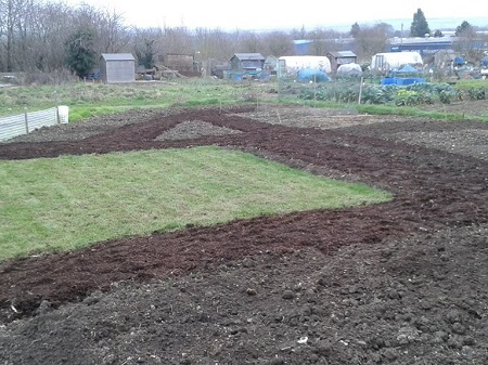 Seedlings plot at the end of the year - tidied and resting