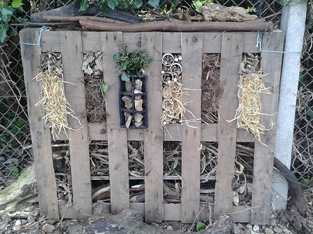 Seedlings plot - bug hotel ready for winter