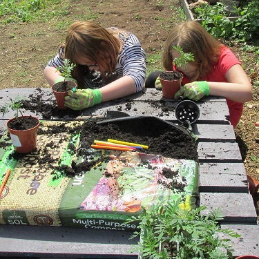 Children potting-on marigold plants