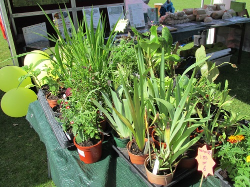 Some of the plants on the stall