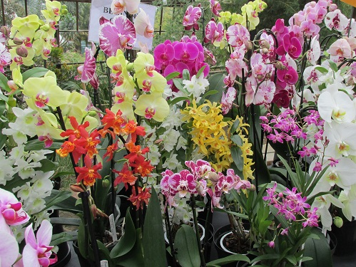 A display of multicoloured orchids