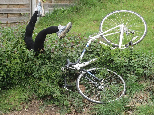 A scarecrow in the form of a cyclist head first in a hedge after coming off
