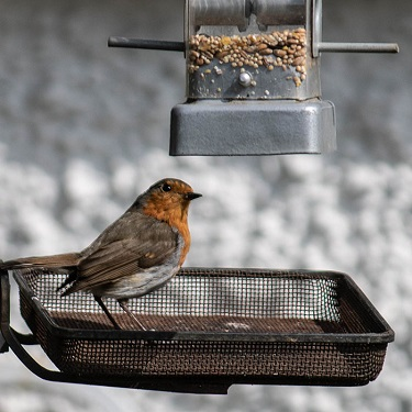 A robin looks longingly at an empty bird feeder