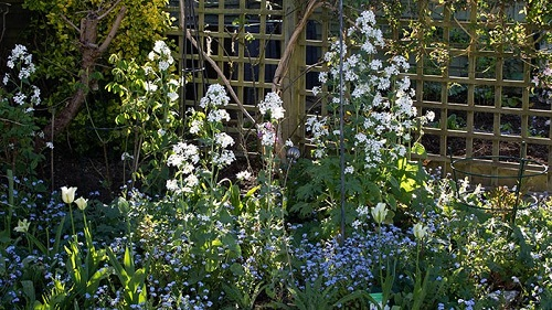 A border of white and blue flowers against a square trellis