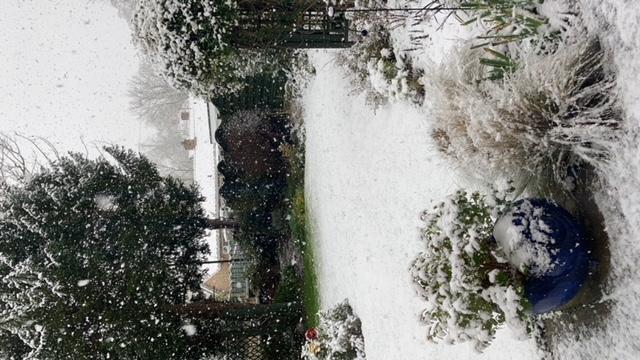 A snow covered garden