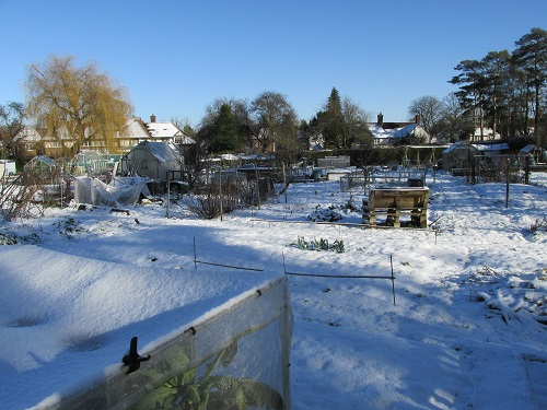 A snow covered allotment